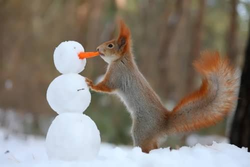 Snowman-and-squirrel_R